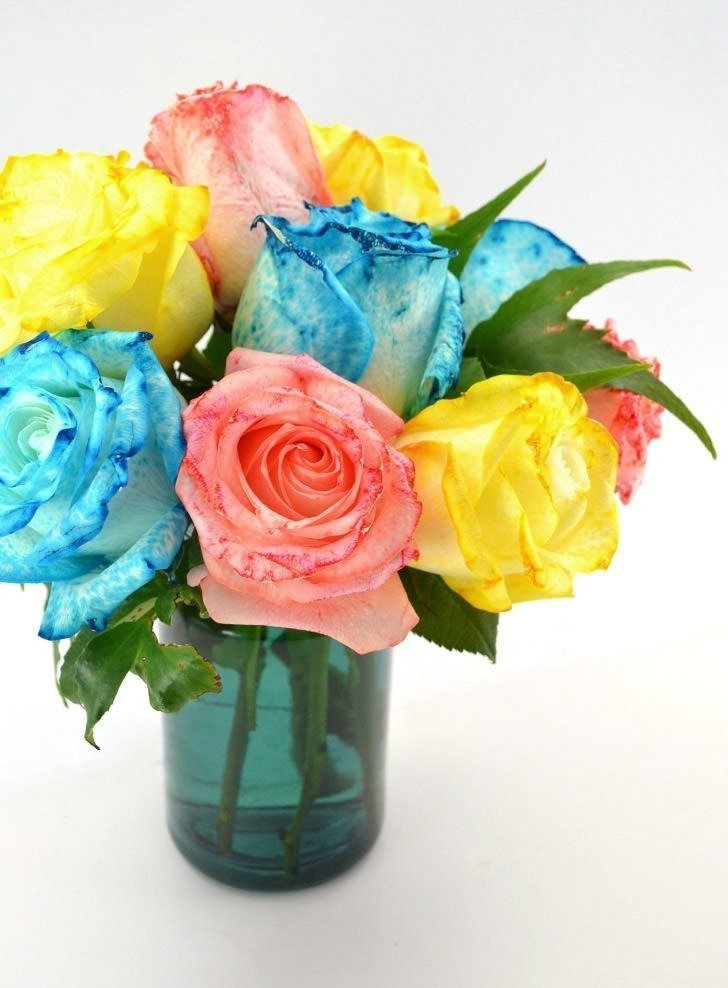 These rainbow dyed roses are gorgeous and a simple yet fun science experiment. What colors of roses will you create?