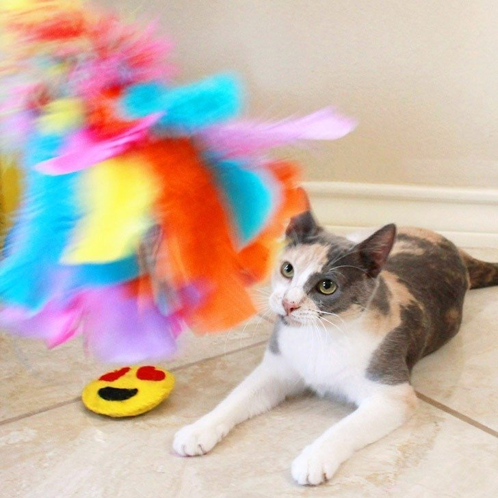 Diy feather cat toys dream a little bigger for Kitten toys you can make
