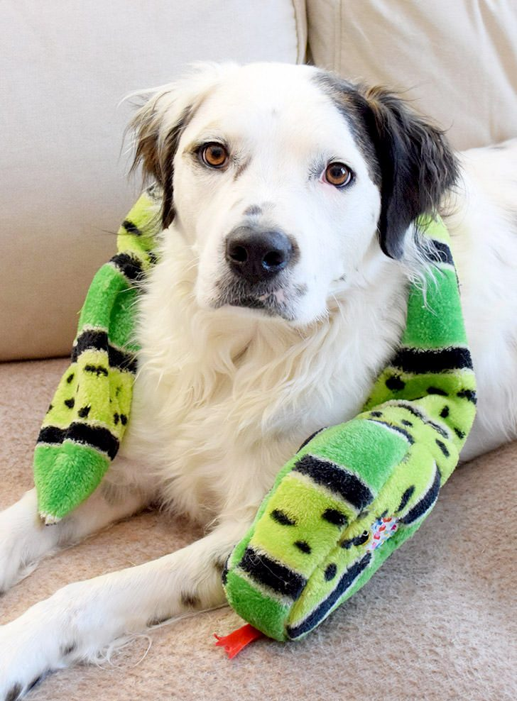 How To Patch Up Old Dog Toys – Waste Less with Tom's of Maine