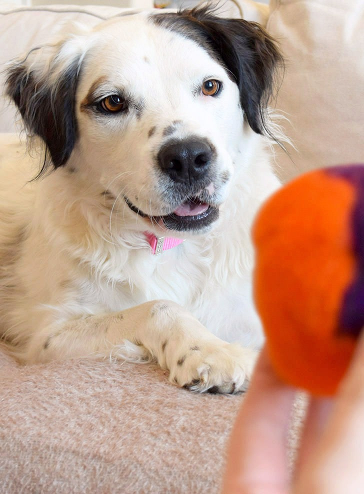 DIY Destructive Dog Toys