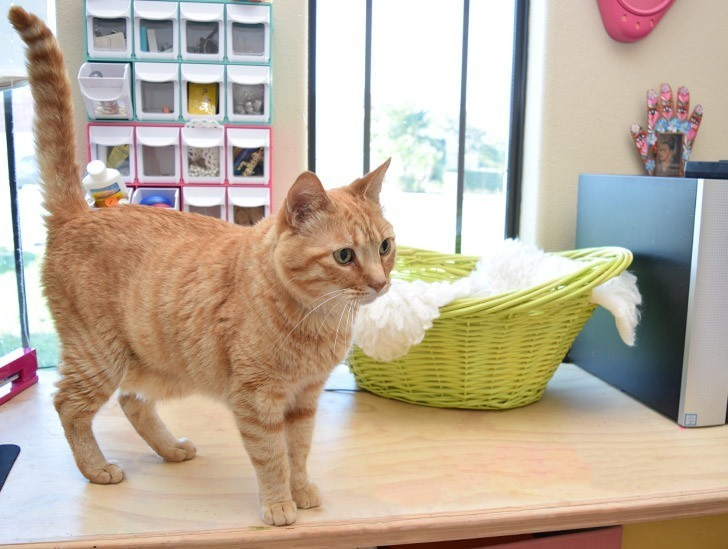 Cats love special places to sleep but giant carpet cat trees can be hideous looking. These sweet baskets are a simple, elegant solution!