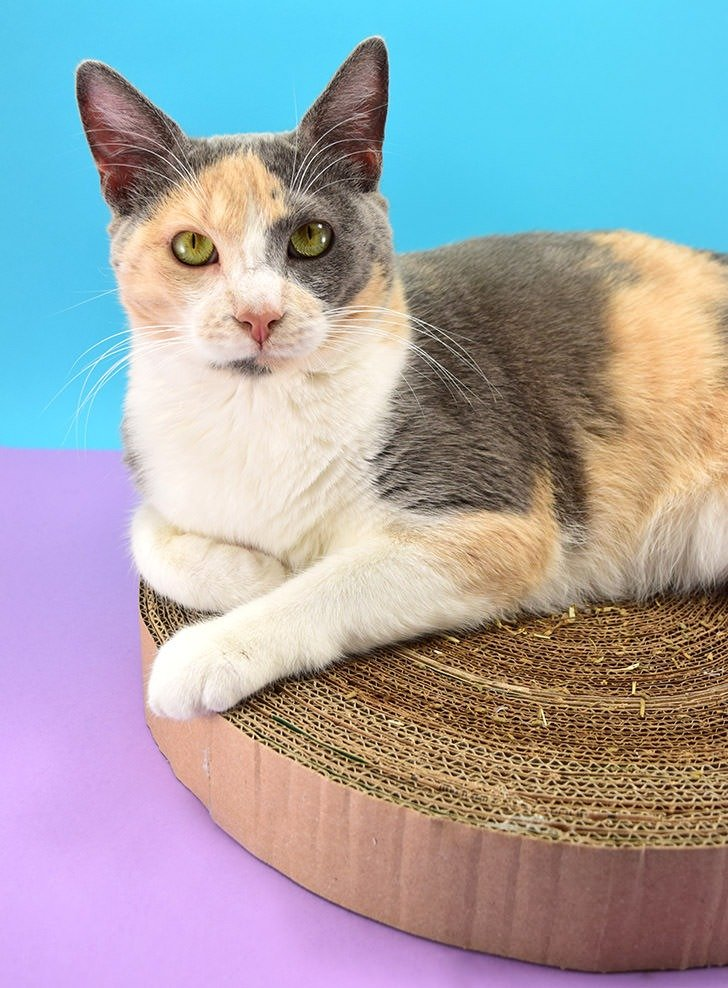 Cats love homemade! This cheap DIY pet project cardboard cat scratcher can help you use up that Amazon Prime box stash and kitty will be sitting pretty!