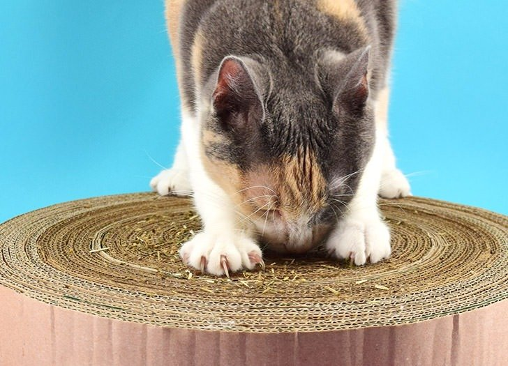 Use up your stash of Prime boxes and keep kitty busy scratching something other than the furniture!