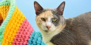 Have a kitty that loves to hide away? Using the yarn you have on hand you can create a lovely crochet cat sack hideaway they'll just love!