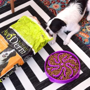They call avocados a superfood for a good reason, and they're not just good for you, but great for your pets, too! Avoderm is full of avocados for dogs!
