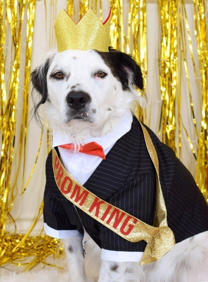 Oh. My. Goodness. Look at these adorable doggos in their Prom King and Queen dog costumes. Get the DIY to dress your pups like royalty, too!