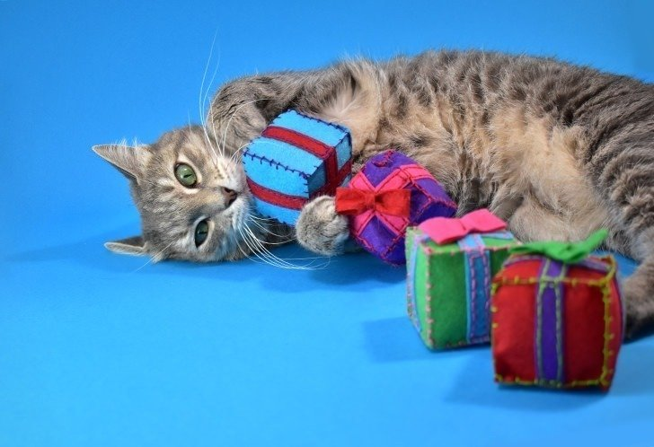 In my experience kitties prefer homemade toys over store-bought every time! These super adorable catnip gifts are both easy and inexpensive to make and totally cat approved!