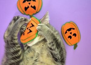 Cats love their homemade pumpkin toys so much!