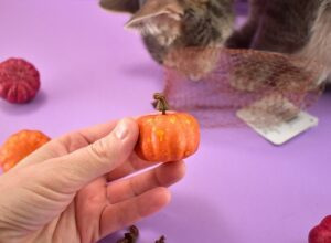 In the fall decor aisle of your craft store look for little pumpkins approximately this size.