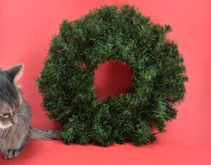 Grab an inexpensive pine wreath at the craft store or in Christmas sections at big box stores.