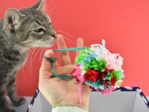Turn yarn into gorgeous multicolor pom poms perfect for adorning a DIY Christmas wreath!