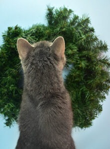 Inexpensive pine wreaths are the perfect base to make gorgeous DIY Christmas wreaths!
