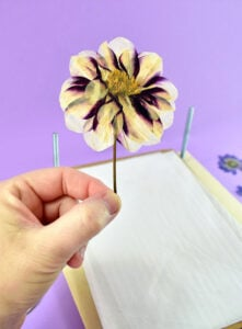 After 2-3 weeks, depending on the thickness of your flowers, you'll be able to remove your perfectly pressed flowers.