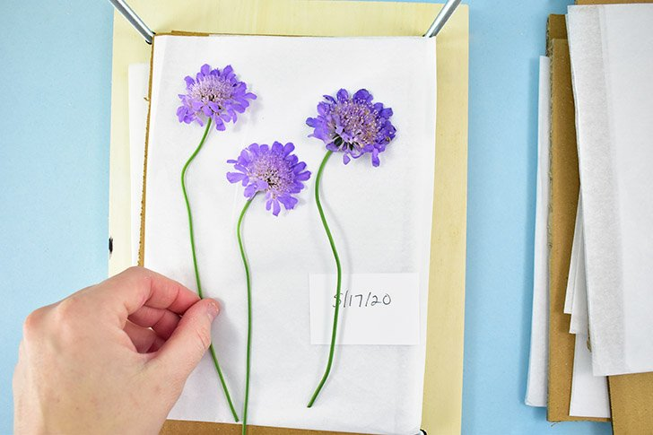 Open the flower press and place a piece of cardboard, then thin paper on top of the wood, in between the bolts.
