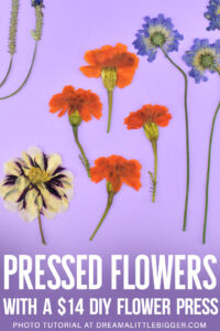 Want to learn how to press flowers? Turn your gorgeous garden posies into pressed flower keepsakes easily by making a cheap DIY flower press!