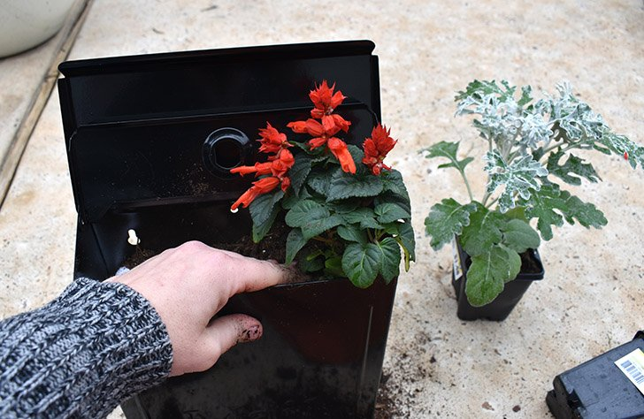 Gently add your plants, pushing into the soil and packing it around the root ball so that it holds firm.
