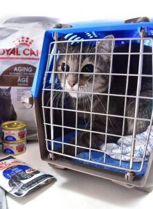 Pop Your Kitty In Their Comfy New Crate and Get to the Vet!