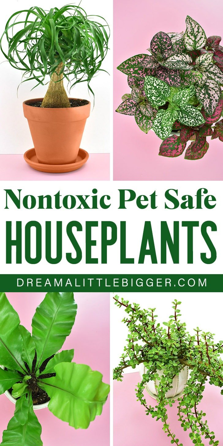 Nontoxic Houseplants Safe For Cats And Dogs Dream A Little Bigger