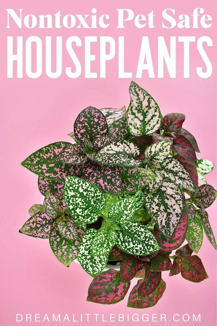 Love the look of houseplants but worry if they are safe for your pets? These nontoxic houseplants safe for pets are attractive and won't harm your cats or dogs!
