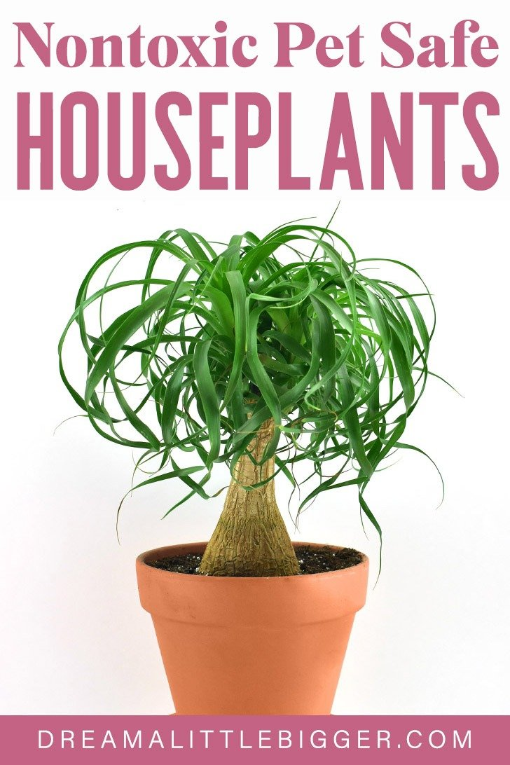 Love the look of houseplants but worry if they safe for your pets? These nontoxic houseplants safe for pets are attractive and won't harm your cats or dogs!